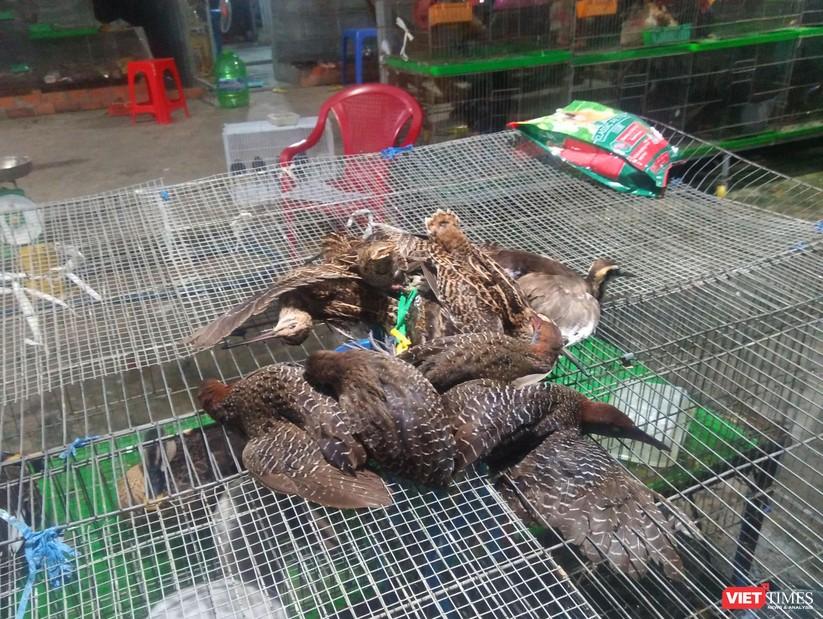 Nạn tàn sát chim trời ở Thạnh Hóa: Có chấm dứt được không? ảnh 14