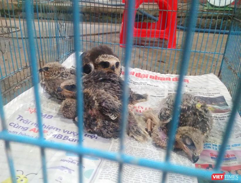 Nạn tàn sát chim trời ở Thạnh Hóa: Có chấm dứt được không? ảnh 4