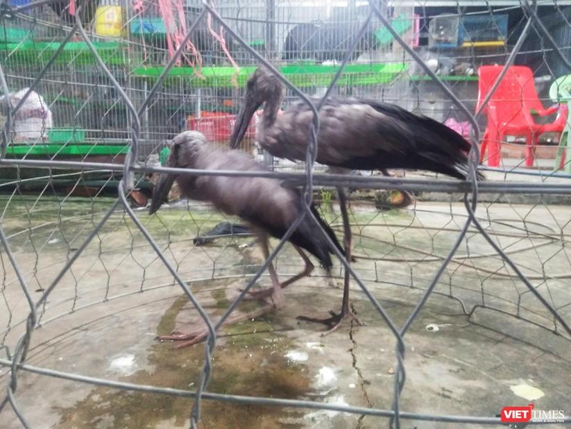 Nạn tàn sát chim trời ở Thạnh Hóa: Có chấm dứt được không? ảnh 3