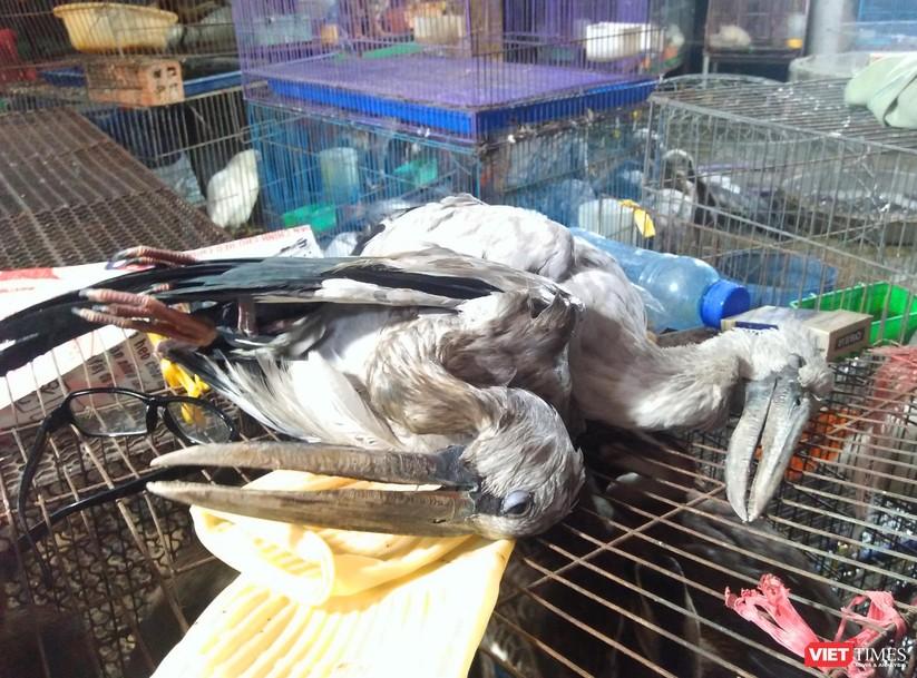 Nạn tàn sát chim trời ở Thạnh Hóa: Có chấm dứt được không? ảnh 7