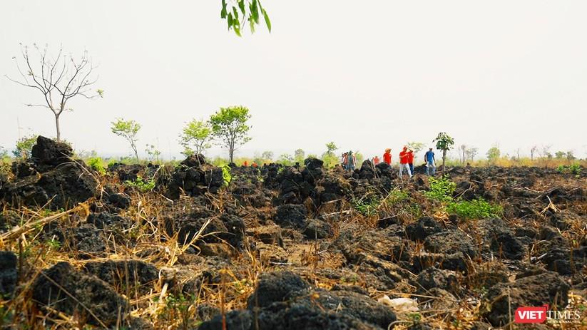 Trải nghiệm mùa vàng trên cánh đồng núi lửa Chư Bluk ảnh 11