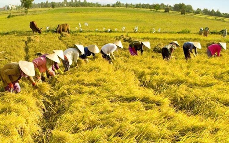 Để Việt Nam thành nước có thu nhập cao năm 2045: Những việc cần làm ngay! ảnh 3