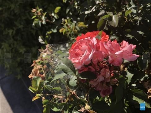 Đẹp hút mắt ảnh chụp thử từ iPhone 7 ảnh 7