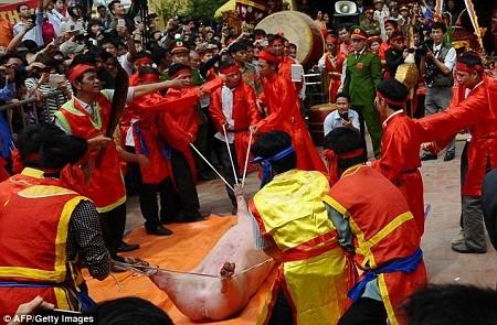 Báo quốc tế viết về lễ hội chém lợn của Việt Nam ảnh 7