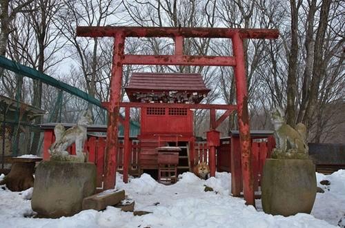 """Ngôi làng """"cáo"""" kỳ lạ ở Nhật Bản ảnh 2"""
