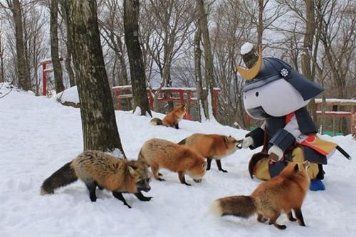 """Ngôi làng """"cáo"""" kỳ lạ ở Nhật Bản ảnh 7"""