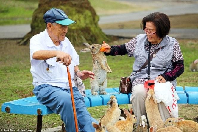 """Bất ngờ với """"đảo thỏ"""" ở Nhật ảnh 1"""