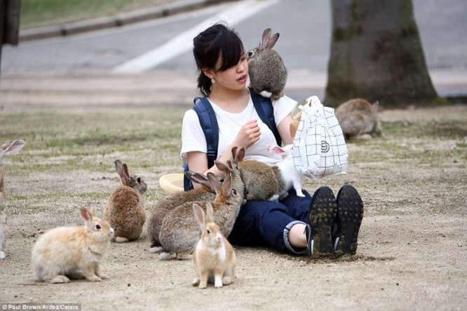 """Bất ngờ với """"đảo thỏ"""" ở Nhật ảnh 2"""