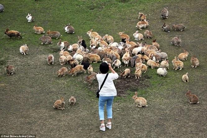 """Bất ngờ với """"đảo thỏ"""" ở Nhật ảnh 4"""
