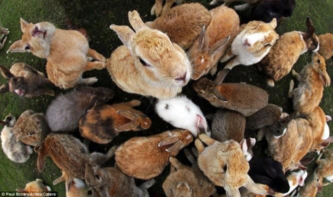 """Bất ngờ với """"đảo thỏ"""" ở Nhật ảnh 5"""