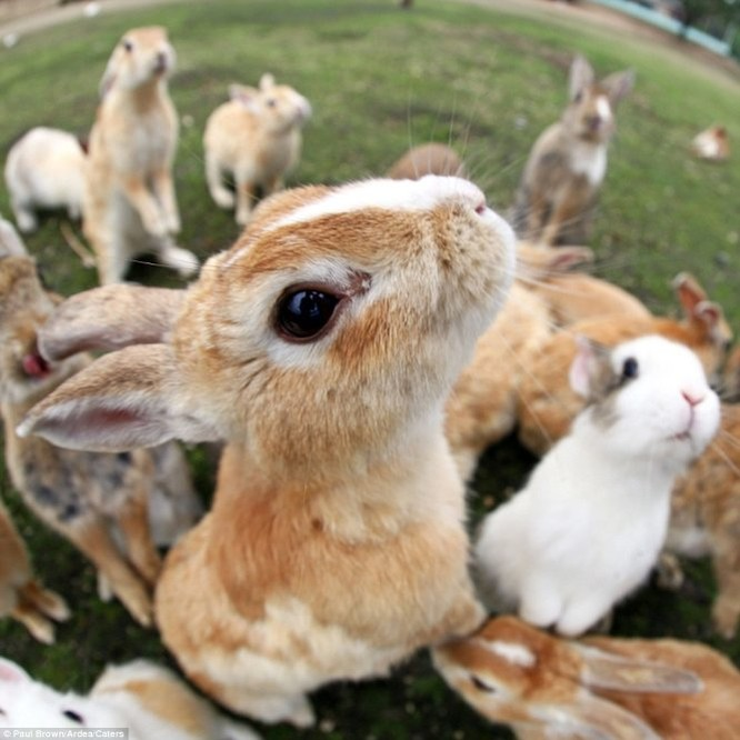 """Bất ngờ với """"đảo thỏ"""" ở Nhật ảnh 6"""