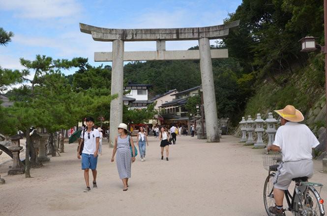 """Những """"công dân"""" hươu trên đảo Miyajima ảnh 9"""