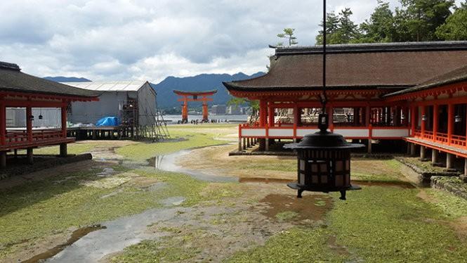 """Những """"công dân"""" hươu trên đảo Miyajima ảnh 11"""