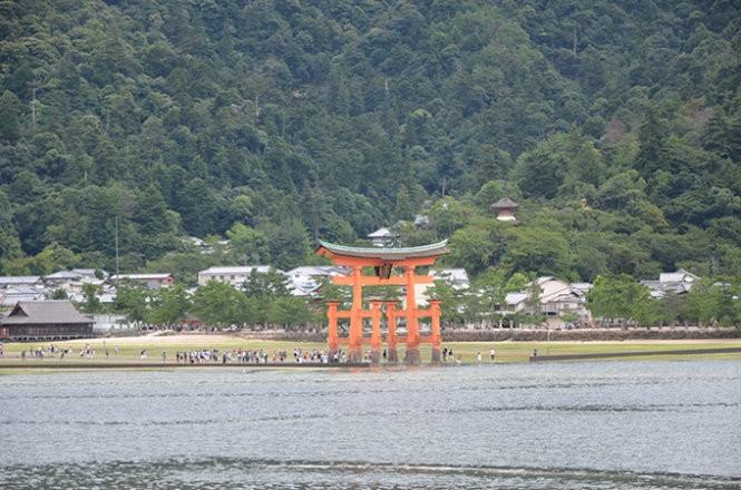 """Những """"công dân"""" hươu trên đảo Miyajima ảnh 12"""
