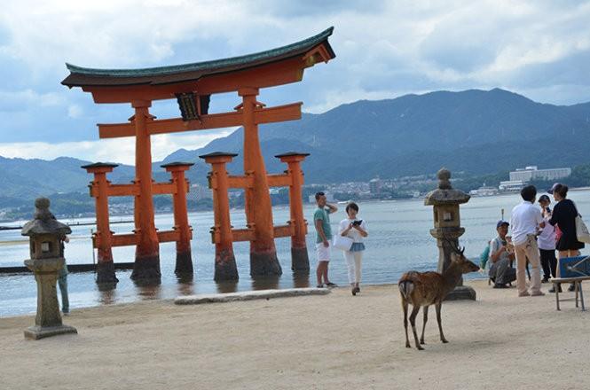 """Những """"công dân"""" hươu trên đảo Miyajima ảnh 8"""