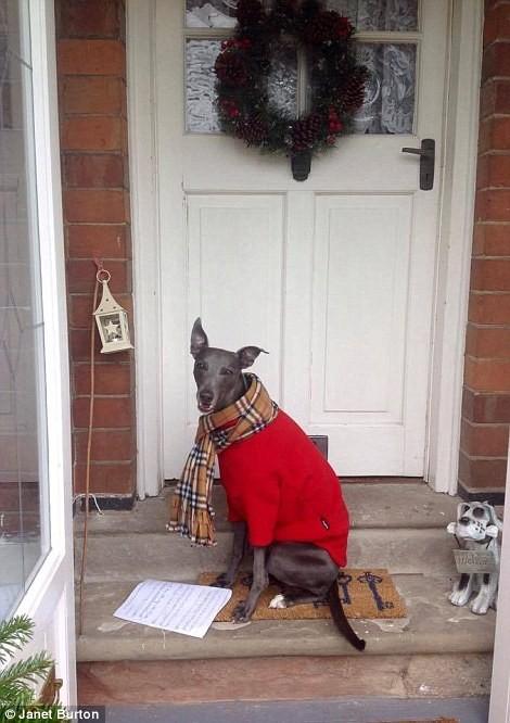 Chùm ảnh hot về chú chó bắt chước bài phát biểu đêm Noel ảnh 9