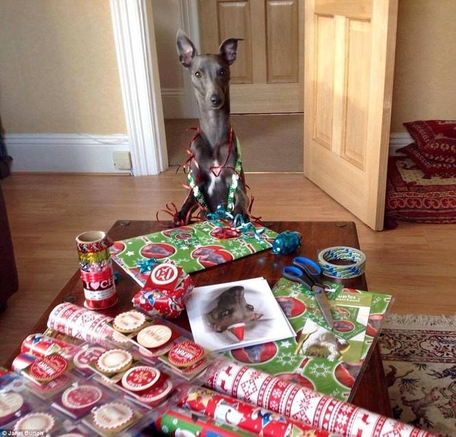 Chùm ảnh hot về chú chó bắt chước bài phát biểu đêm Noel ảnh 8