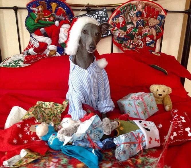 Chùm ảnh hot về chú chó bắt chước bài phát biểu đêm Noel ảnh 2