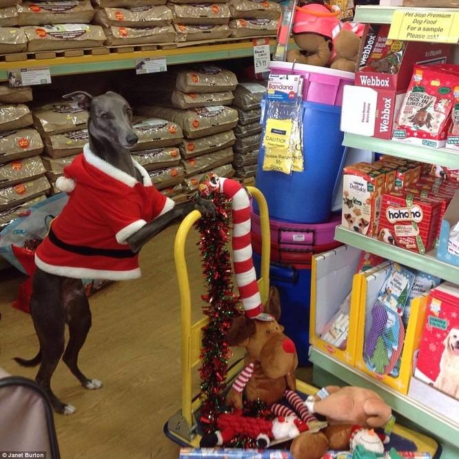 Chùm ảnh hot về chú chó bắt chước bài phát biểu đêm Noel ảnh 4