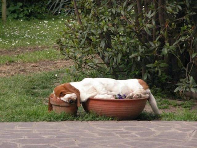 Cười ngất với 1001 tư thế ngủ khó đỡ của thú cưng ảnh 11