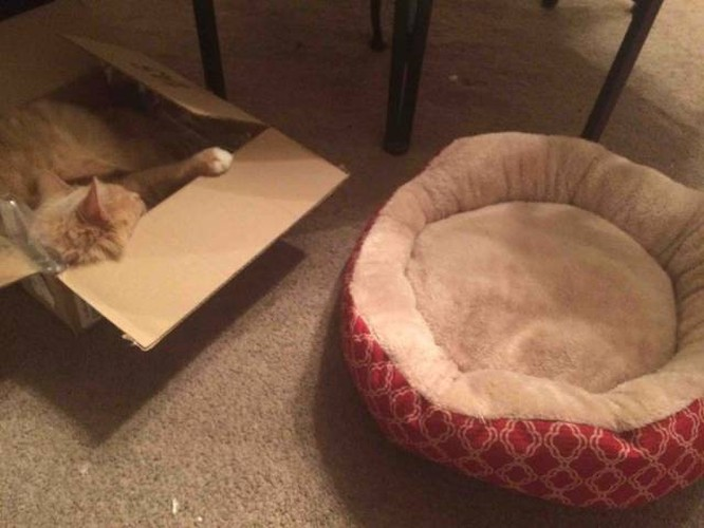Cười ngất với 1001 tư thế ngủ khó đỡ của thú cưng ảnh 14