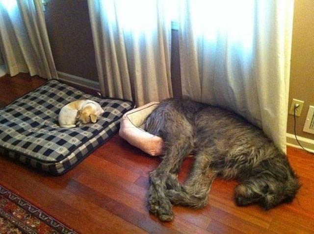 Cười ngất với 1001 tư thế ngủ khó đỡ của thú cưng ảnh 5