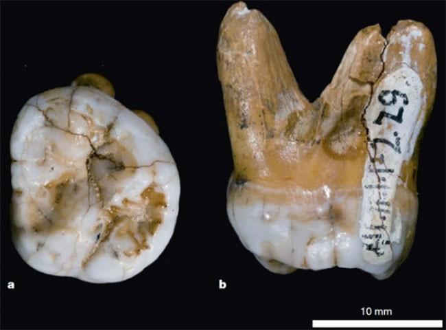 12 khám phá khảo cổ quan trọng thay đổi lịch sử nhân loại ảnh 8