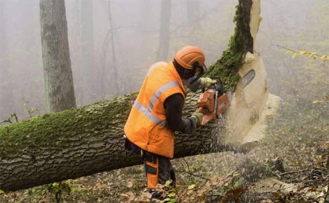 Top 11 công việc nguy hiểm nhất trên thế giới ảnh 10
