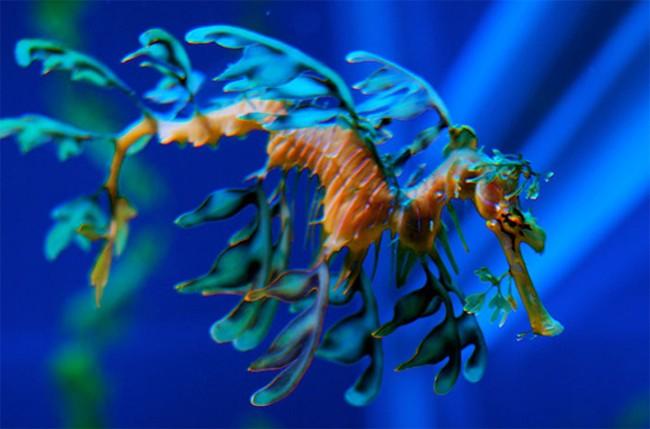 """Ngỡ ngàng trước 23 sinh vật """"ngoài hành tinh"""" dưới lòng đại dương ảnh 10"""