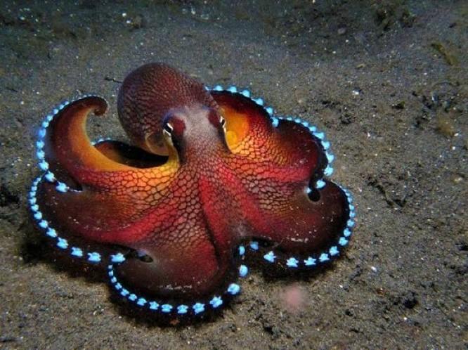 """Ngỡ ngàng trước 23 sinh vật """"ngoài hành tinh"""" dưới lòng đại dương ảnh 23"""