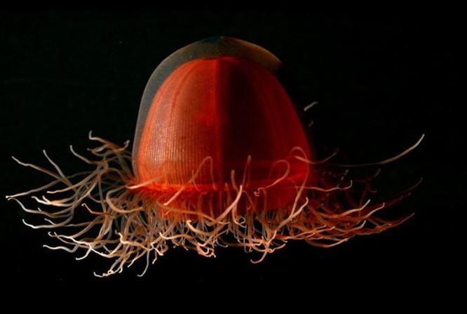 """Ngỡ ngàng trước 23 sinh vật """"ngoài hành tinh"""" dưới lòng đại dương ảnh 16"""