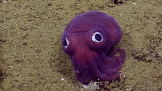 """Ngỡ ngàng trước 23 sinh vật """"ngoài hành tinh"""" dưới lòng đại dương ảnh 8"""