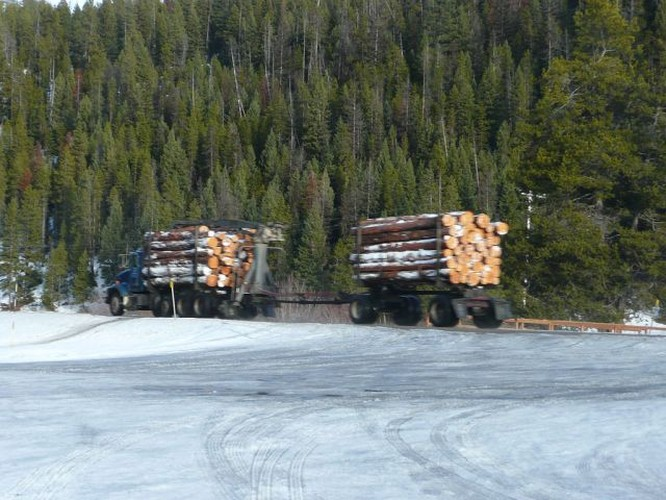 Forests Lumber Will Decrease