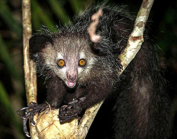 Những loài động vật đáng sợ nhất thế giới mà bạn từng nhìn thấy ảnh 9