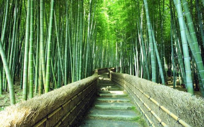 Một phút lắng lòng trước vẻ đẹp của Kyoto, Nhật Bản ảnh 8