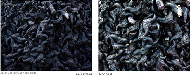 So sánh đẳng cấp chụp hình giữa máy ảnh 9000 USD và iPhone 8 Plus ảnh 5