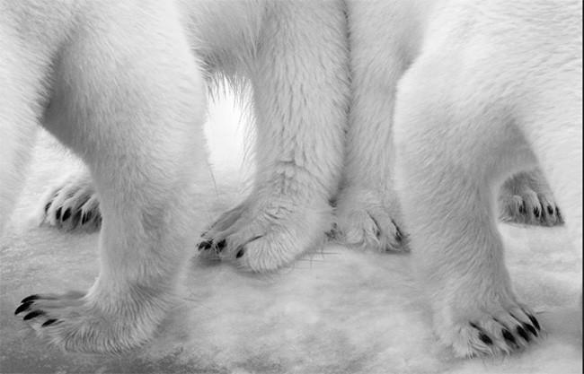 Thiên nhiên hùng vĩ bi tráng qua 15 bức ảnh đoạt giải ảnh động vật hoang dã 2017 ảnh 10