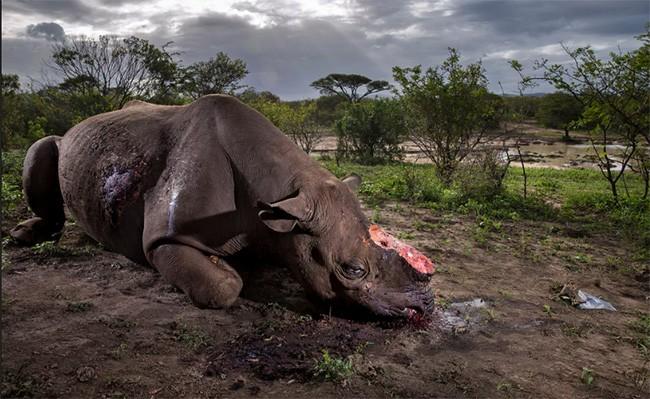 Thiên nhiên hùng vĩ bi tráng qua 15 bức ảnh đoạt giải ảnh động vật hoang dã 2017 ảnh 1