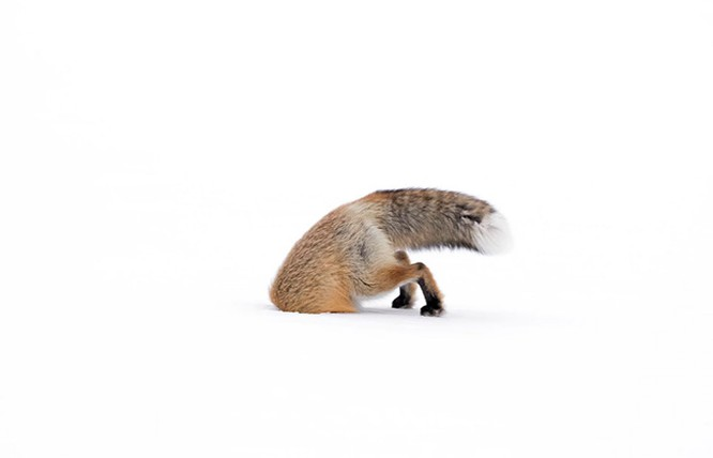 Thiên nhiên hùng vĩ bi tráng qua 15 bức ảnh đoạt giải ảnh động vật hoang dã 2017 ảnh 3