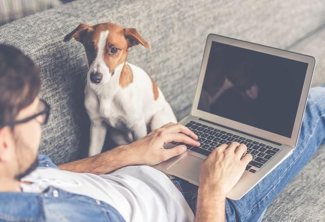 10 lý do nên nhận nuôi một chú cún vào năm 2018 ảnh 1