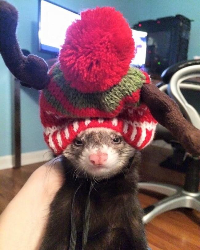 Khi đến lúc phải đội một chiếc mũ