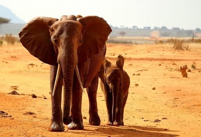 Hóa ra lâu nay chúng ta vẫn luôn hiểu sai về Châu Phi! ảnh 4
