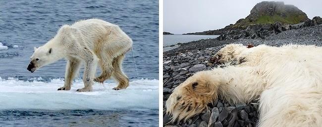 13 hình ảnh khủng khiếp tố cáo con người đã hủy hoại mẹ thiên nhiên thế nào ảnh 10