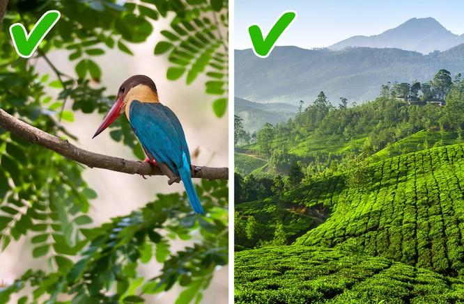 12 lý do khiến bạn hối tiếc khi chưa đến thăm Ấn Độ ảnh 2