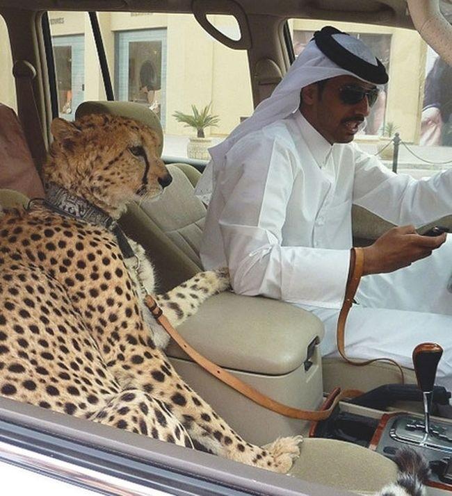17 hình ảnh bá đạo chỉ có thể nhìn thấy ở Dubai ảnh 8