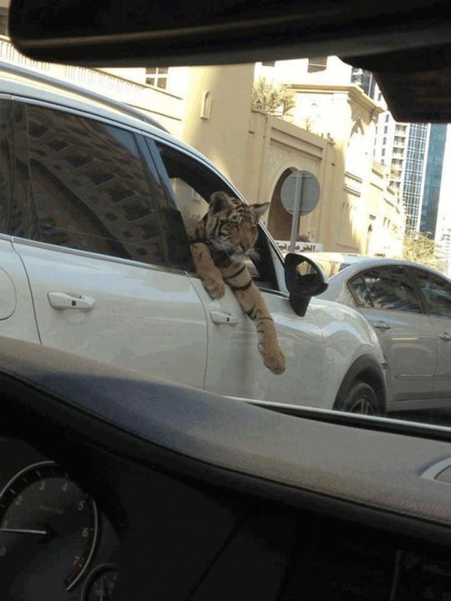 17 hình ảnh bá đạo chỉ có thể nhìn thấy ở Dubai ảnh 9