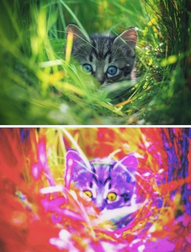 Khám phá thế giới qua nhãn quan của các loài động vật ảnh 4