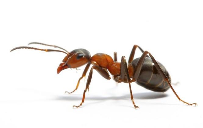 Bạn có biết 10 loài động vật nào thông minh nhất trên hành tinh? ảnh 10