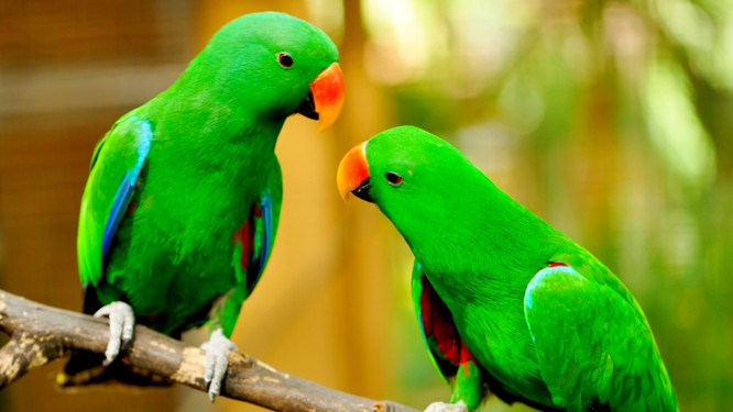 Bạn có biết 10 loài động vật nào thông minh nhất trên hành tinh? ảnh 2