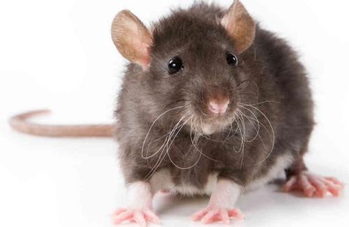 Bạn có biết 10 loài động vật nào thông minh nhất trên hành tinh? ảnh 3